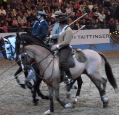 Portuguese - The Lusitano Ride Photo 1