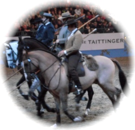 Portuguese - The Lusitano Ride 3