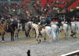 Portuguese - The Lusitano Ride 4