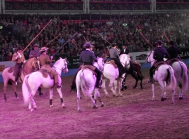 Portuguese - The Lusitano Ride 7